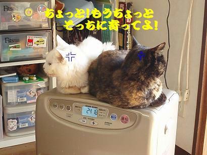 PC310057.JPG