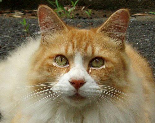 水文字加工で泣いている猫