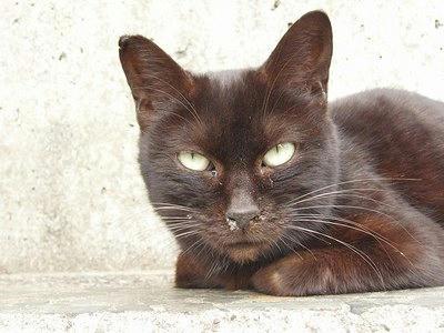 白っぽく写った黒猫の写真