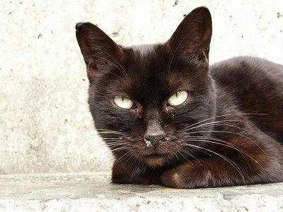 黒くした黒猫の写真