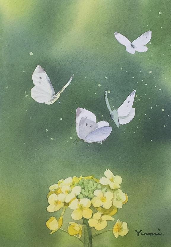 モンシロチョウの画像 p1_25