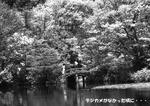 春の龍安寺庭園