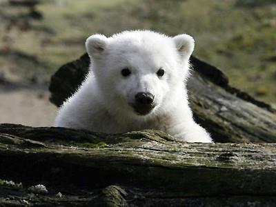 赤ちゃんクマのかわいい画像3