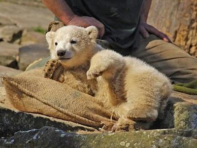 赤ちゃんクマのかわいい画像9