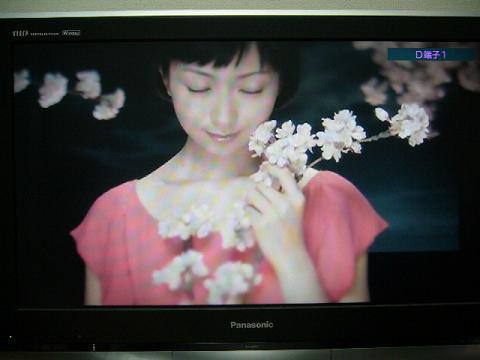 「サクラビト」PV映像2