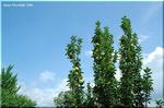 青い空と静かな雲とおいしそうなリンゴ