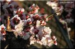 街角で普通に梅が咲き出す陽気になりました