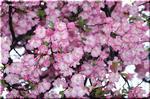 花色も花形も千差万別! 多彩な品種の魅力 クレマチス