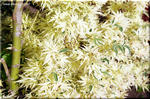 葉が四季折々 季節に応じて変化する モミジ 「胡蝶の舞」