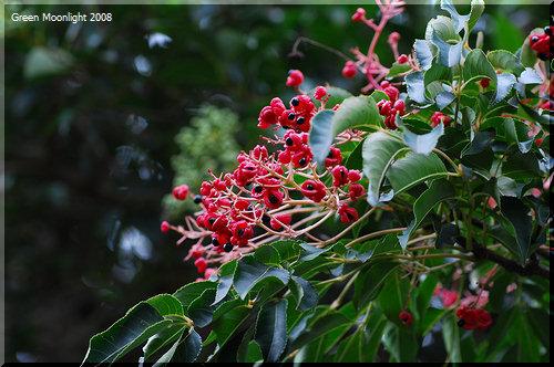 秋の一瞬!赤い実が美しくさが煌めく