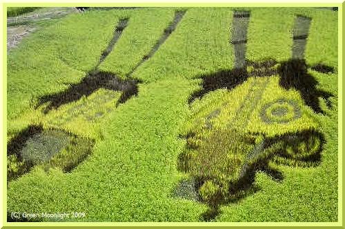 揺れる稲穂にドラえもんと鹿踊り、楽しい田んぼアート