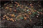 イチョウは街路樹に多用される「生きている化石」です