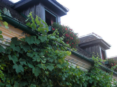 ホイリゲの屋根