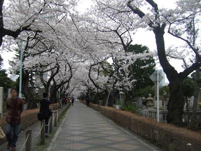 青山墓地1