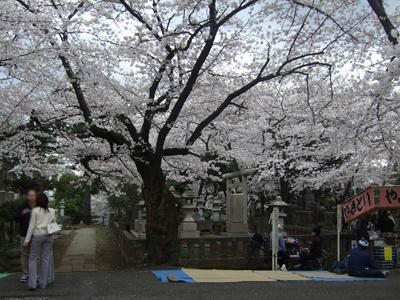 青山墓地2
