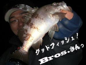 釣り メバル Bros.さん