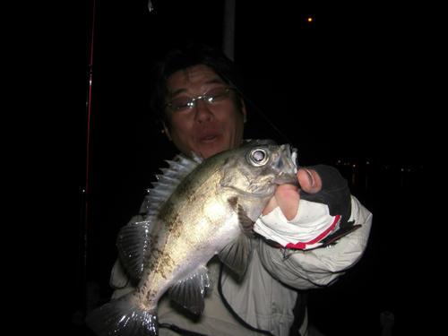 釣り メバリング とびしま