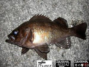 釣り メバル とびしま