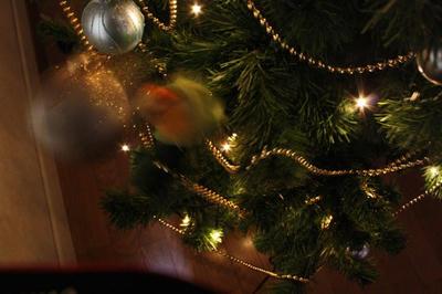 tree_mb_crazy.jpg