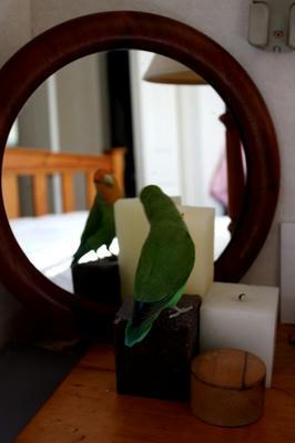 mb_mirror3.jpg