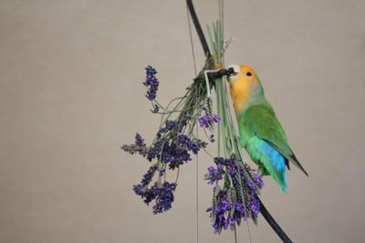 lavender_mb.jpg