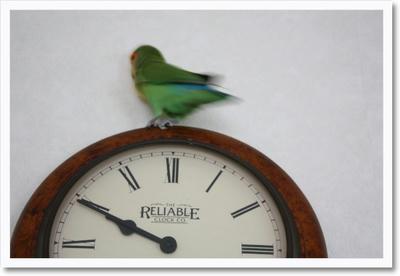 clock_mboni.jpg