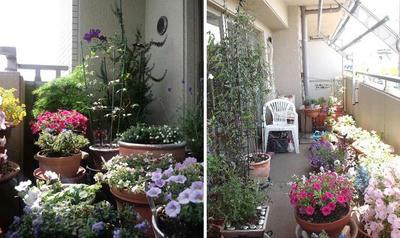 momopapa_gardens.jpg