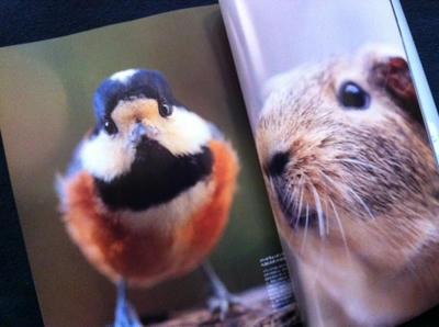 casa_bird_beeber.JPG