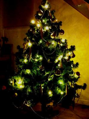 cristmastree2011.jpg