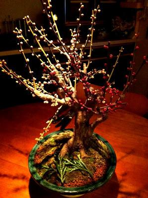 ume_tree.jpg