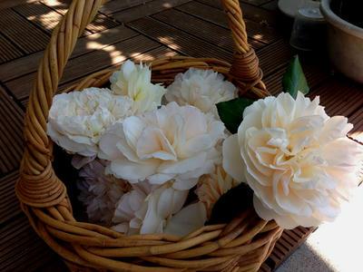 rose_bascket.jpg
