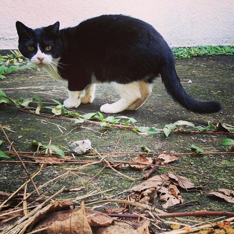 街で見かけた猫
