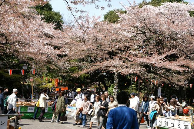 上野公園で花見