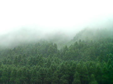 fog07-21.jpg