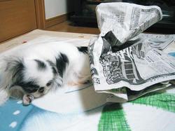 新聞ぐちゃぐちゃにしたまでよ