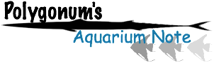 polygonum's aquarium note