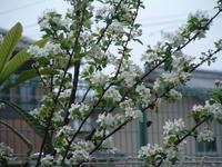 garden08.jpg