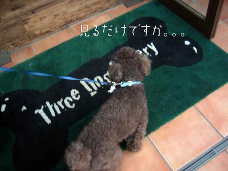 three dog