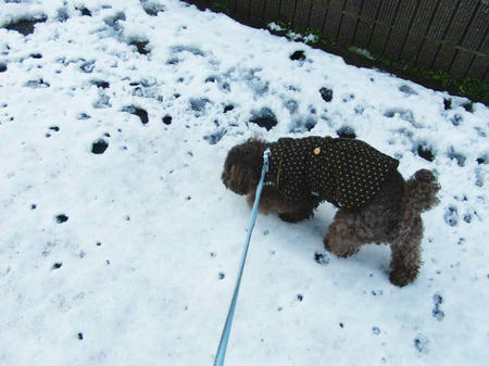 積雪の中を歩くぷるぷる