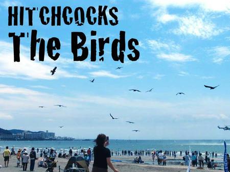 ヒッチコック 鳥