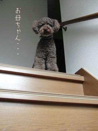 階段を上るぷるぷる