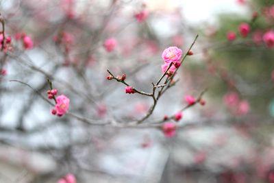 梅が咲きはじめたよ