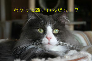 IMG_4841_edited-1.jpg