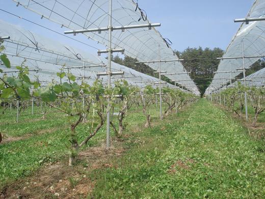 「葡萄が丘農業研究所」の試験圃場
