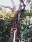 siroyamarenriboku.jpg