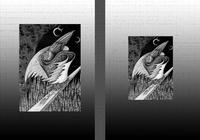 モノクロームイラスト(鉛筆画) - 「鴉」