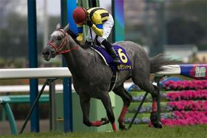 20080420-00000010-kiba-horse-view-000.jpg
