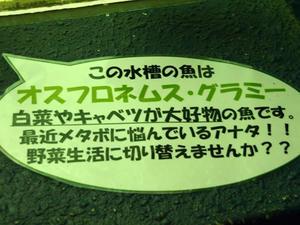 P9023931shuusei.JPG