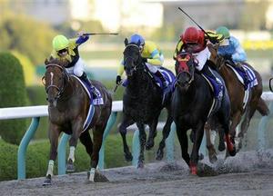 20081207-00000515-sanspo-horse-view-000.jpg