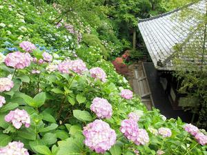 20100712_193shuusei.jpg